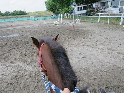 新馬調教 グランドワークを騎乗につなげる
