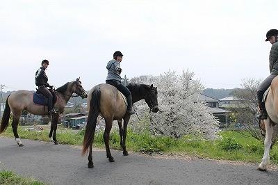 馬と桜を見に行きました