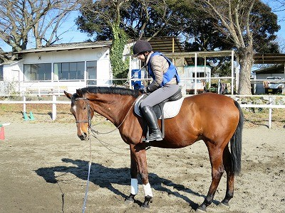 ハピコミ体験乗馬