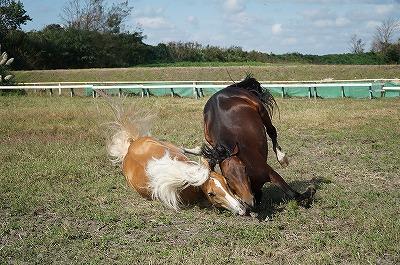 だから馬達の絆を大切にしなければ