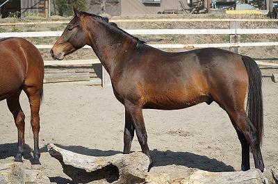 丸いお尻は楽しい乗馬の原動力