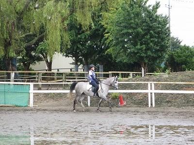 馬に求めるのは服従よりも敬愛