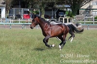 健康でよく調教された馬をパートナーに!