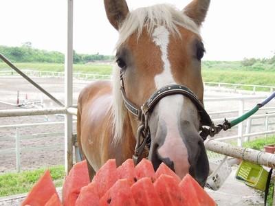 乗馬とスイカは相性ばっちり