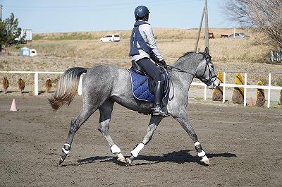 馬は愛情とこまやかさ