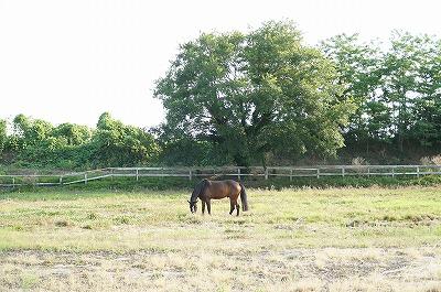 幸せな馬こそが幸せな乗馬をくれる