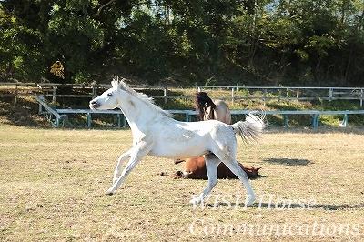 別世界の乗馬