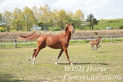 走る馬の親子