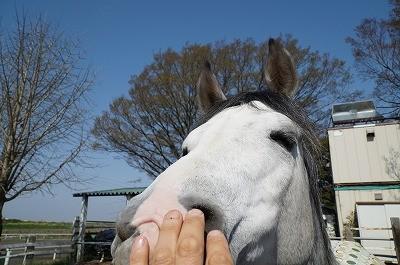 馬と心が通じ合う