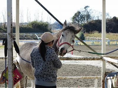馬との幸せな関係