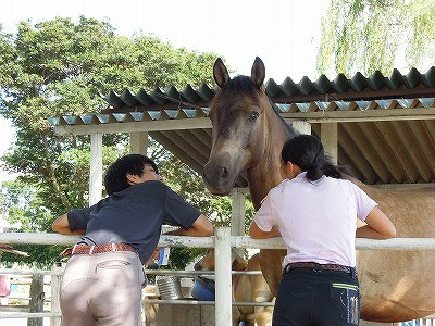放牧の馬と仲良く
