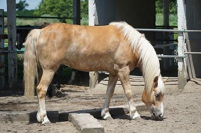 馬を見ればわかる