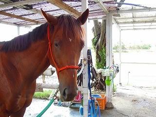 馬とのコミュニケーション方法