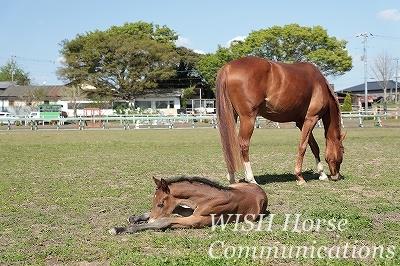 馬の健康管理