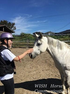 馬は健康が大事だ!