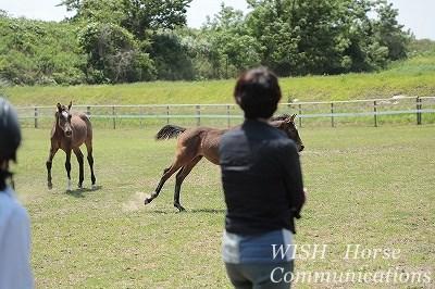 馬と仲良くなる乗馬