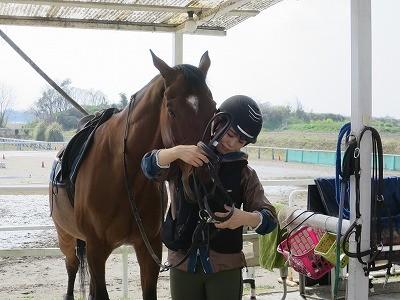 穏やかな馬装