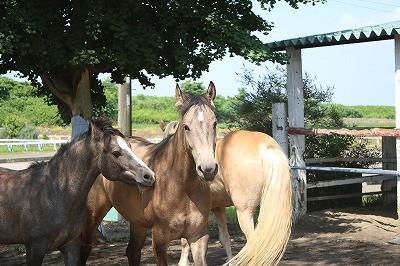 放牧を楽しむ馬達