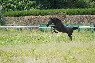 乗用馬の販売