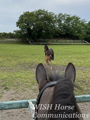 馬の父と子