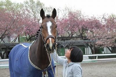 桜の中で、馬と朝デート