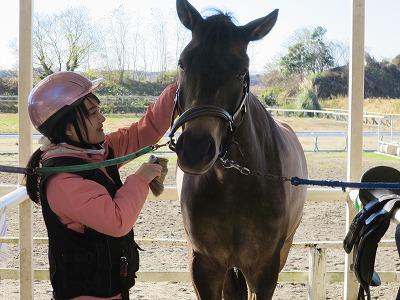 馬と仲良く手入れ