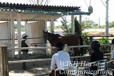 グランドワークで学ぶ乗馬
