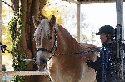 馬とどれだけ通じてる?