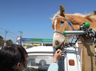 マーカーラオを食べる馬