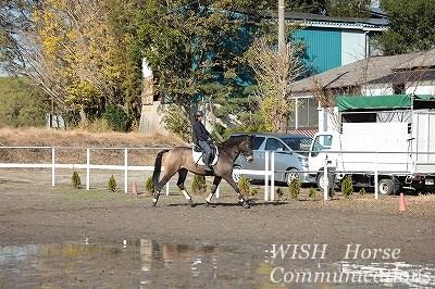 健康な馬で柔らかい乗り心地