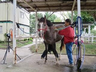 馬の装蹄風景