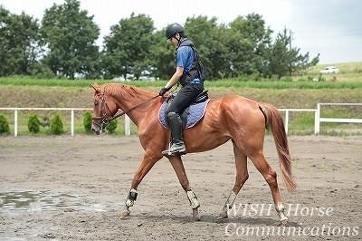 馬とアイコンタクトが重要
