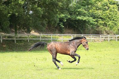 馬を馬らしく飼う