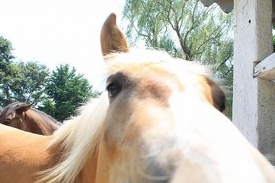 可愛い馬の写真