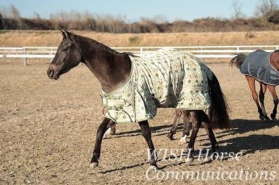 馬が迎えてくれる乗馬