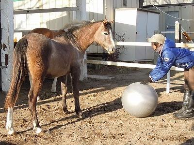 馬とバランスボールで遊んでみた