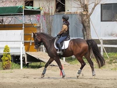 馬の美しいフォーム