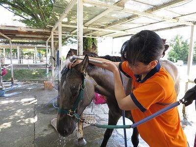 馬の顔も洗いましょう