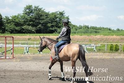 安心して馬と向き合う乗馬