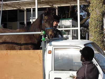 何が正しいかは馬が教えてくれるよ
