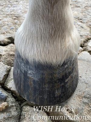馬の健康な蹄