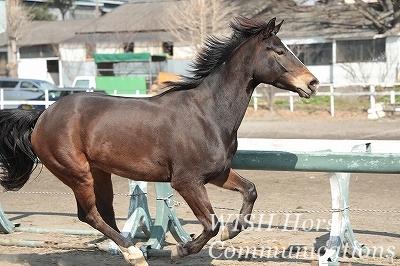 のびのび走る乗馬