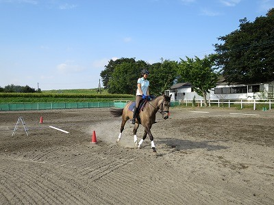 馬が証明する愛情乗馬