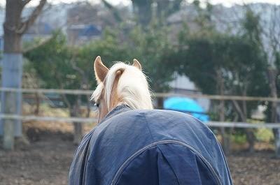 もの想う馬の後ろ姿
