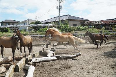 馬の社会性