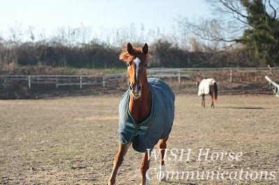 駆け寄ってきてくれる馬