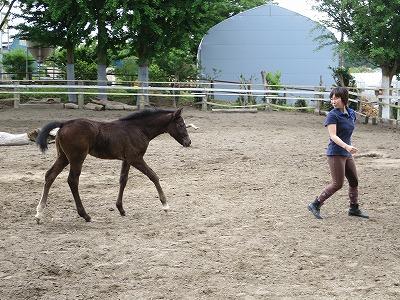 馬を健康にする乗馬