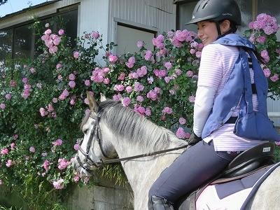 バラいっぱいの乗馬クラブ
