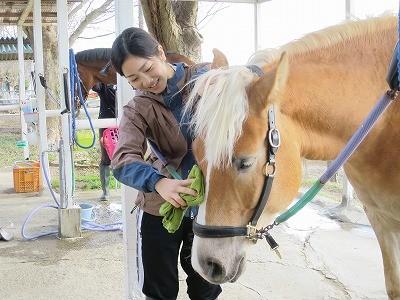 体験乗馬で馬とのふれあい
