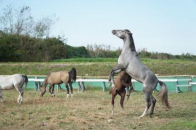 馬たちの自然な行動が見られます